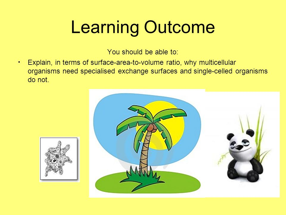 Learning Outcome You should be able to: