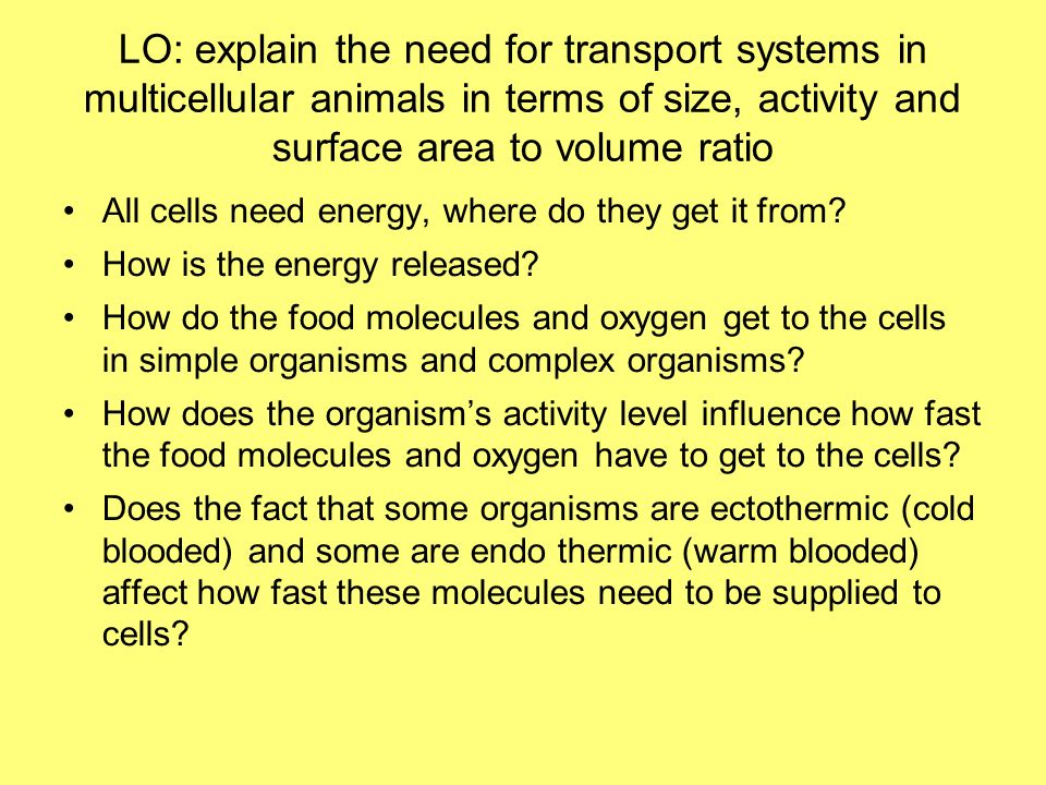 LO: explain the need for transport systems in multicellular animals in terms of size, activity and surface area to volume ratio