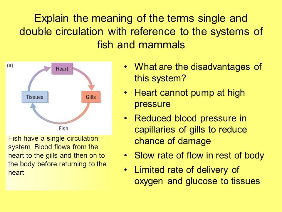Explain the meaning of the terms single and double circulation with reference to the systems of fish and mammals