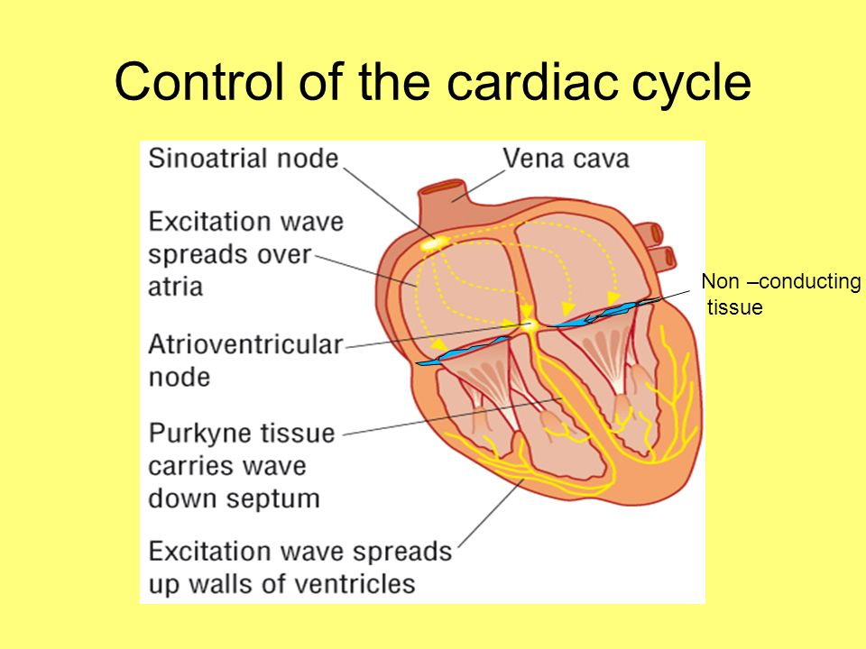 Control of the cardiac cycle