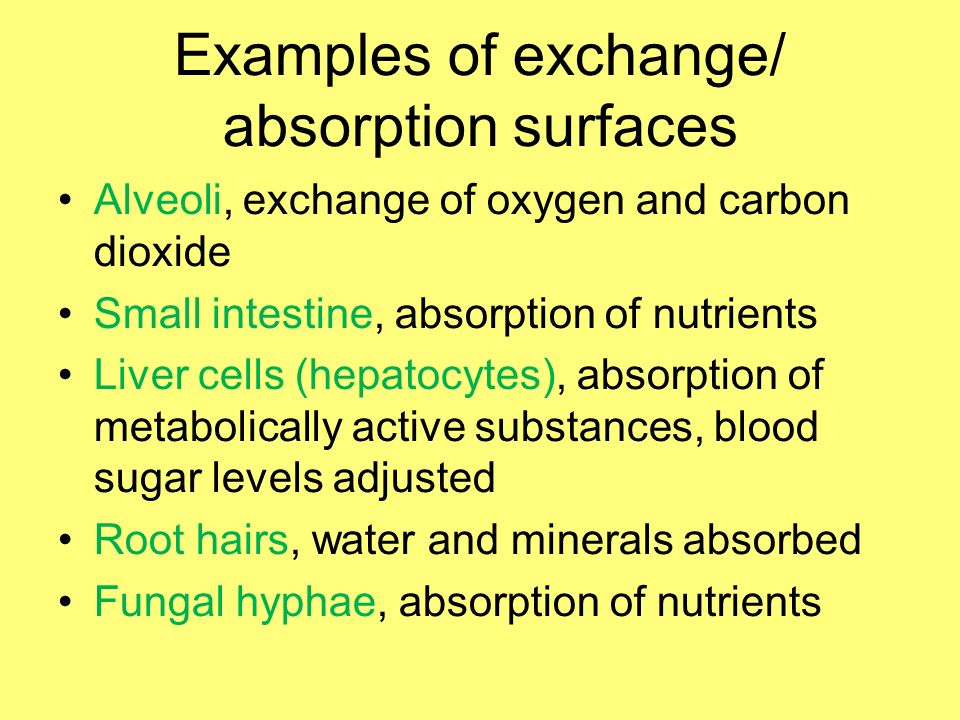 Examples of exchange/ absorption surfaces