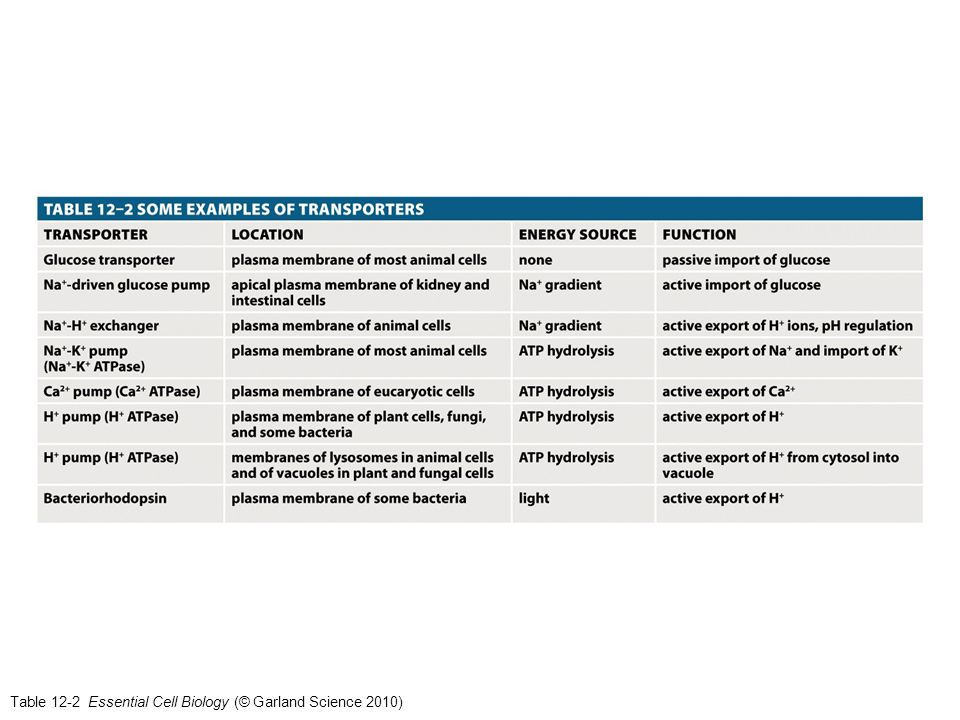 Table 12-2 Essential Cell Biology (© Garland Science 2010)