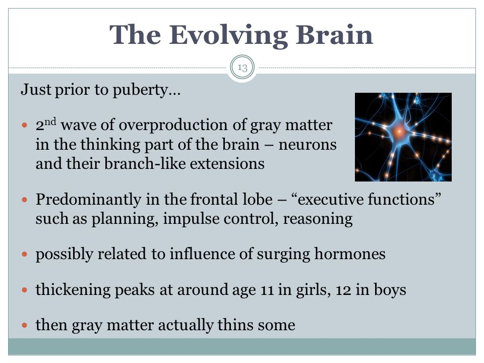 The Evolving Brain Just prior to puberty…