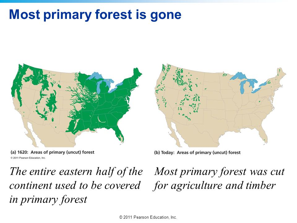 Most primary forest is gone