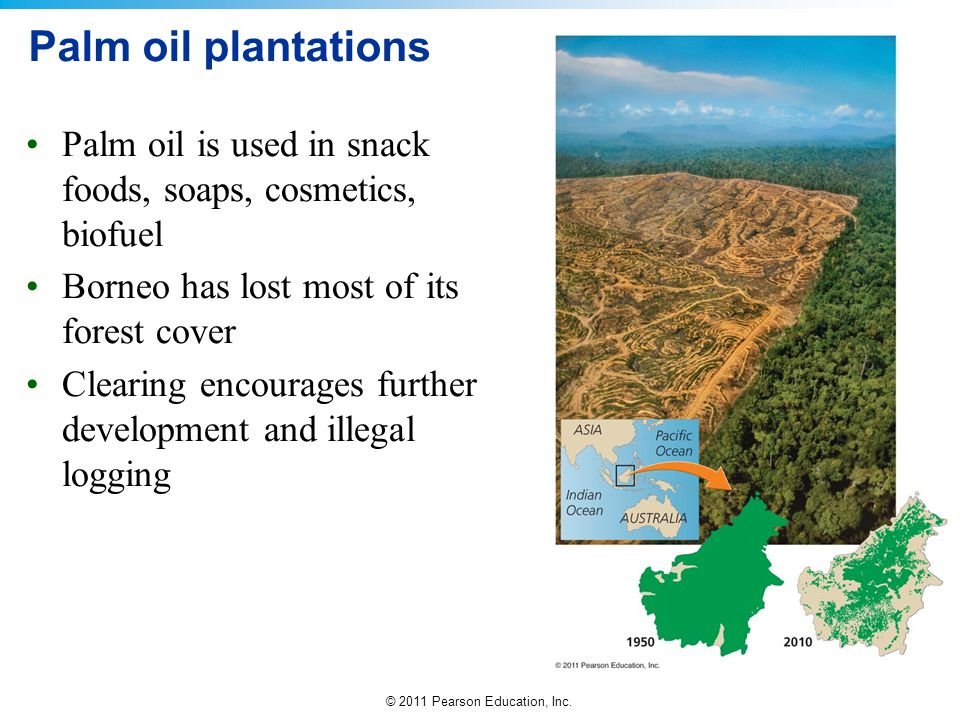 Palm oil plantations Palm oil is used in snack foods, soaps, cosmetics, biofuel. Borneo has lost most of its forest cover.