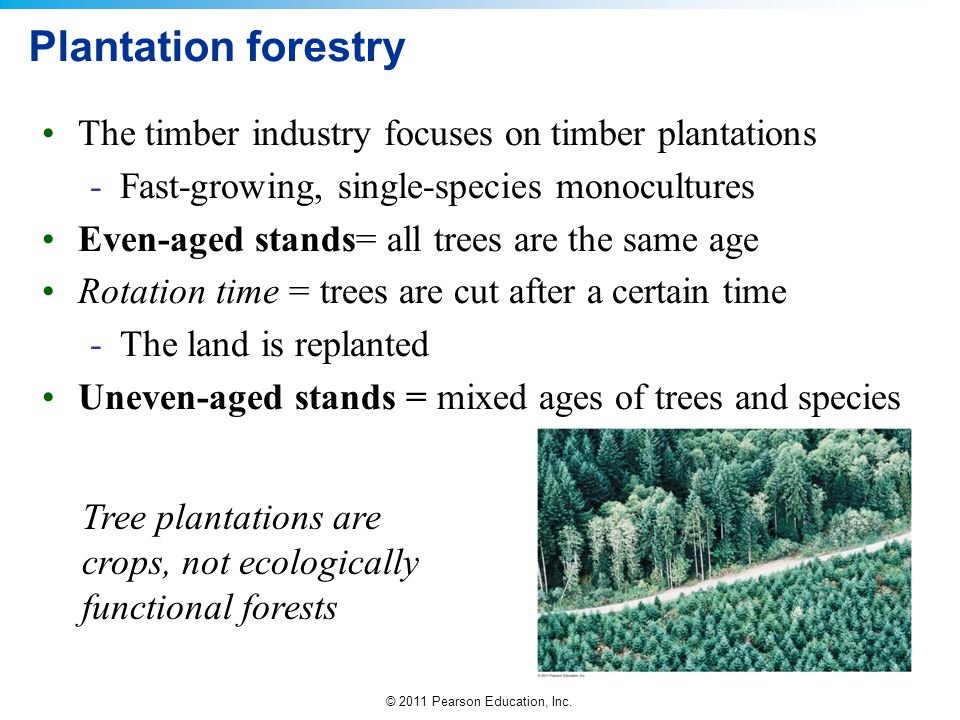 Plantation forestry The timber industry focuses on timber plantations
