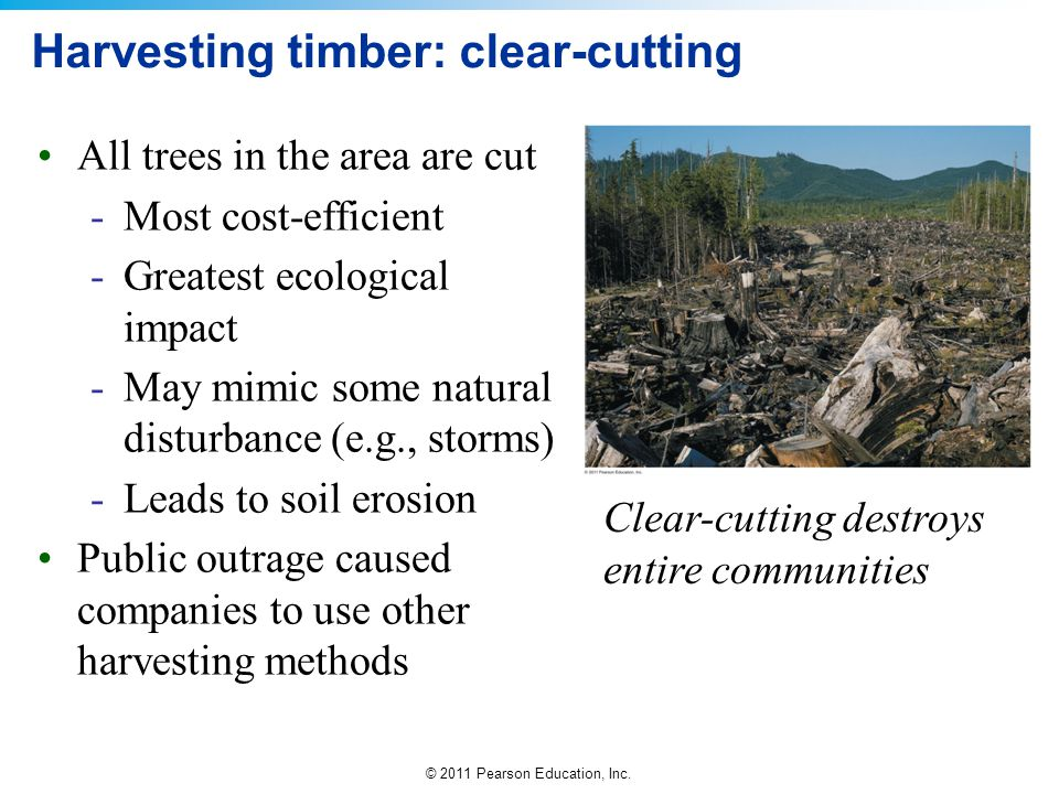 Harvesting timber: clear-cutting