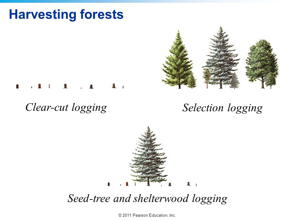 Seed-tree and shelterwood logging