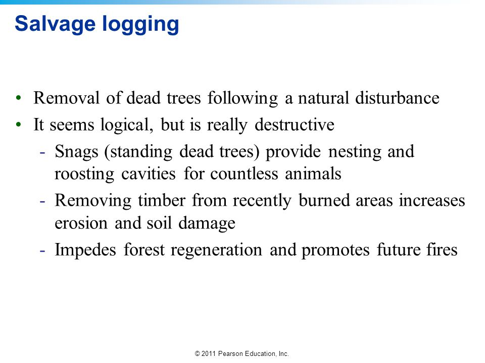 Salvage logging Removal of dead trees following a natural disturbance