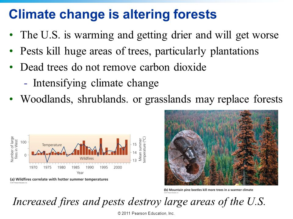 Climate change is altering forests