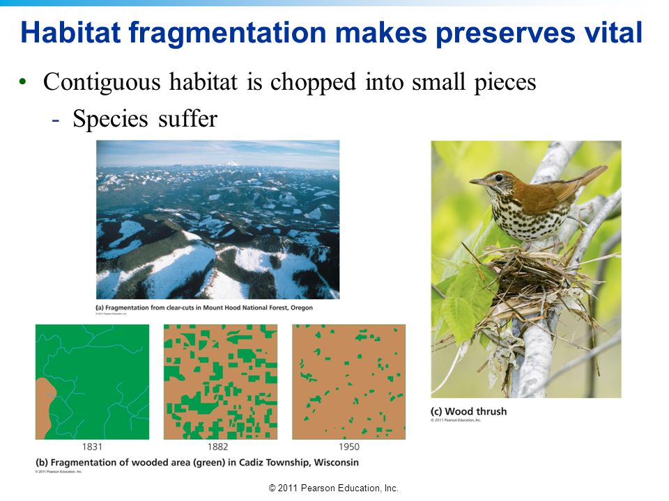 Habitat fragmentation makes preserves vital