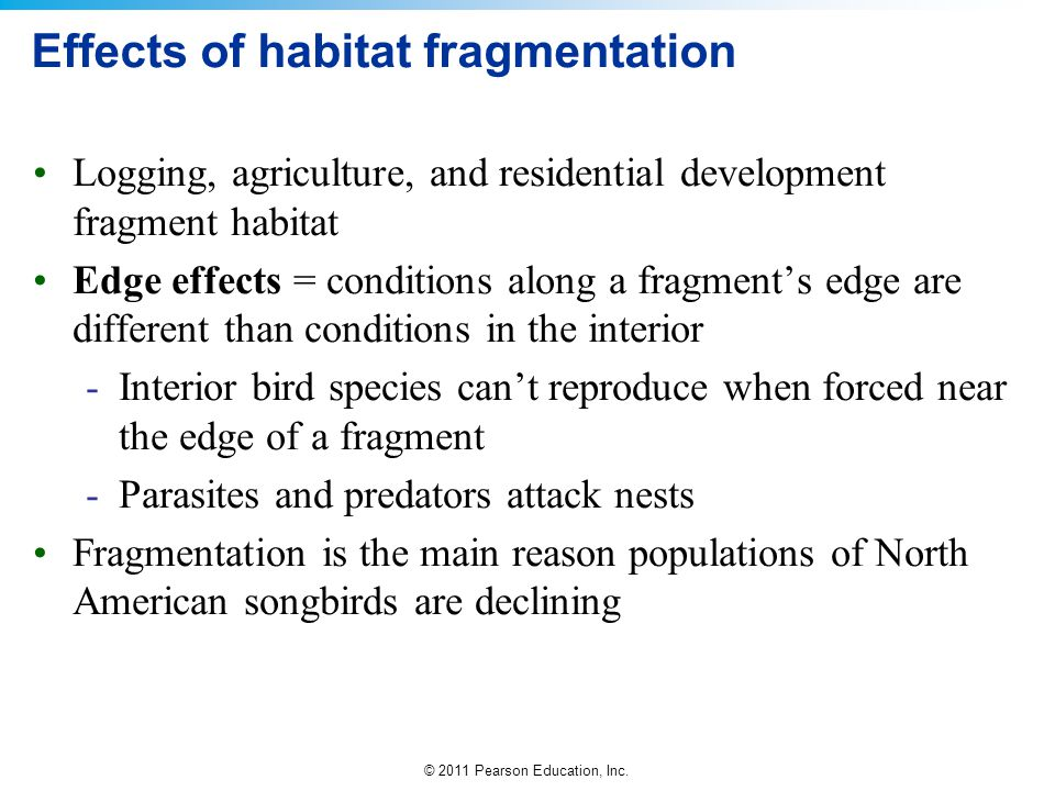 Effects of habitat fragmentation