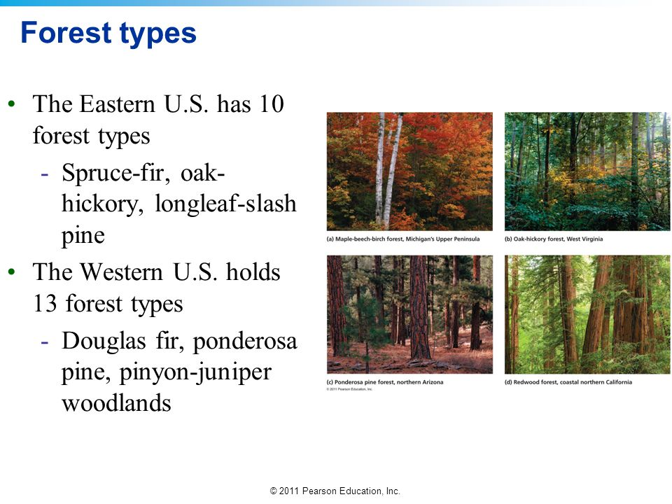 Forest types The Eastern U.S. has 10 forest types
