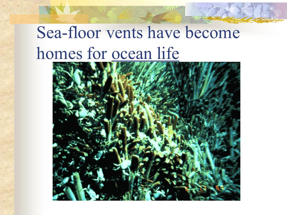 Sea-floor vents have become homes for ocean life