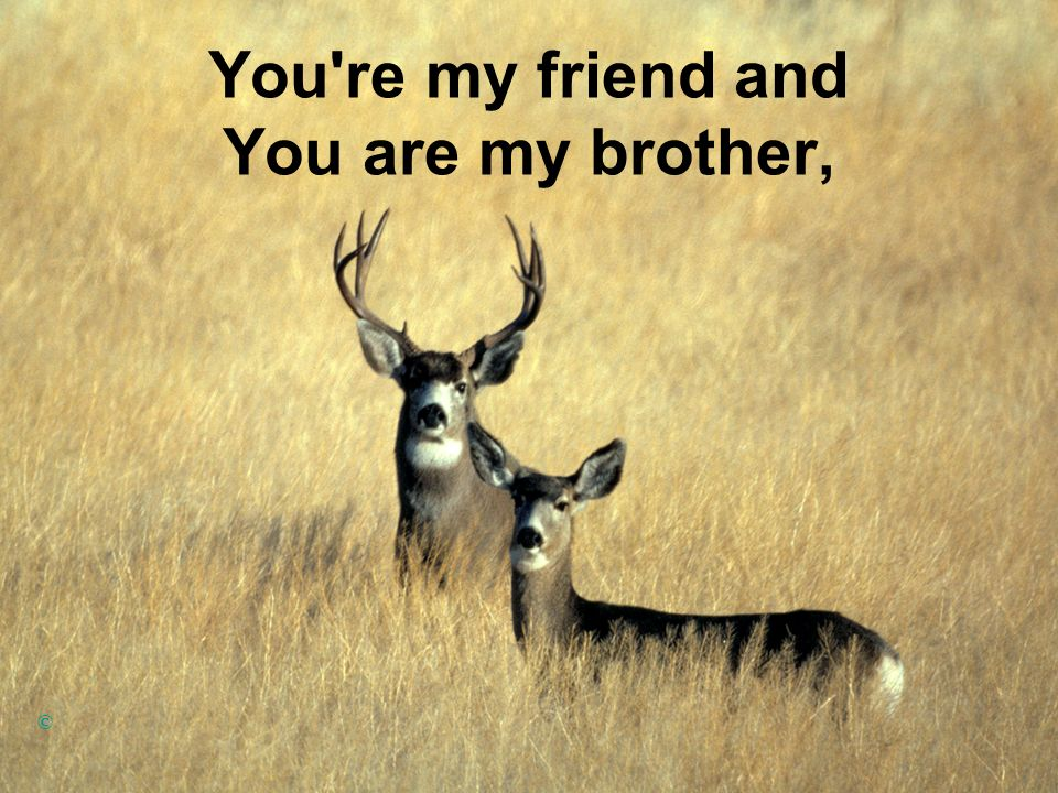 You re my friend and You are my brother,