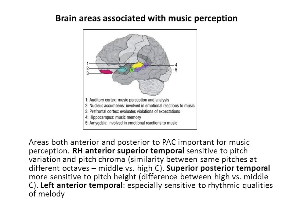 Brain areas associated with music perception