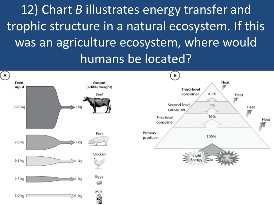 12) Chart B illustrates energy transfer and trophic structure in a natural ecosystem.