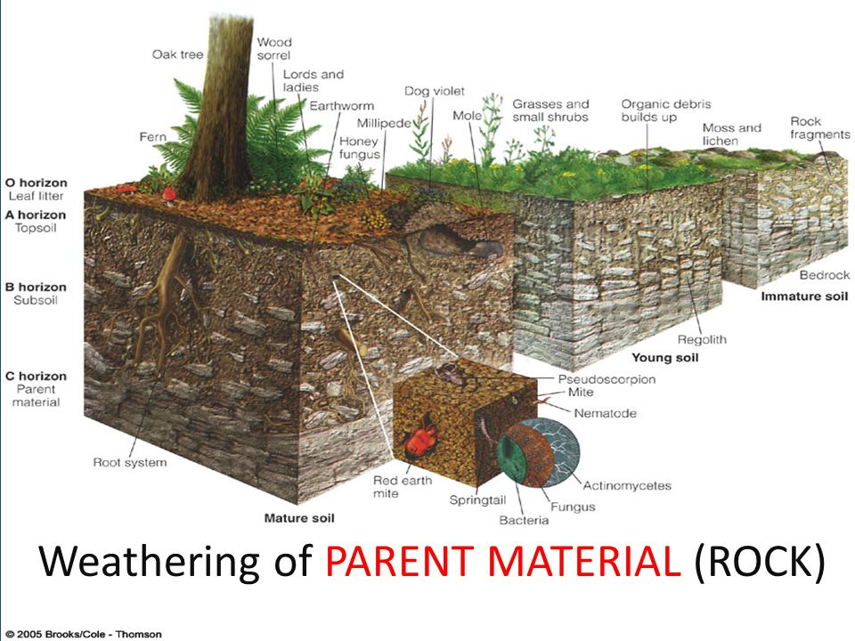 Weathering of PARENT MATERIAL (ROCK)