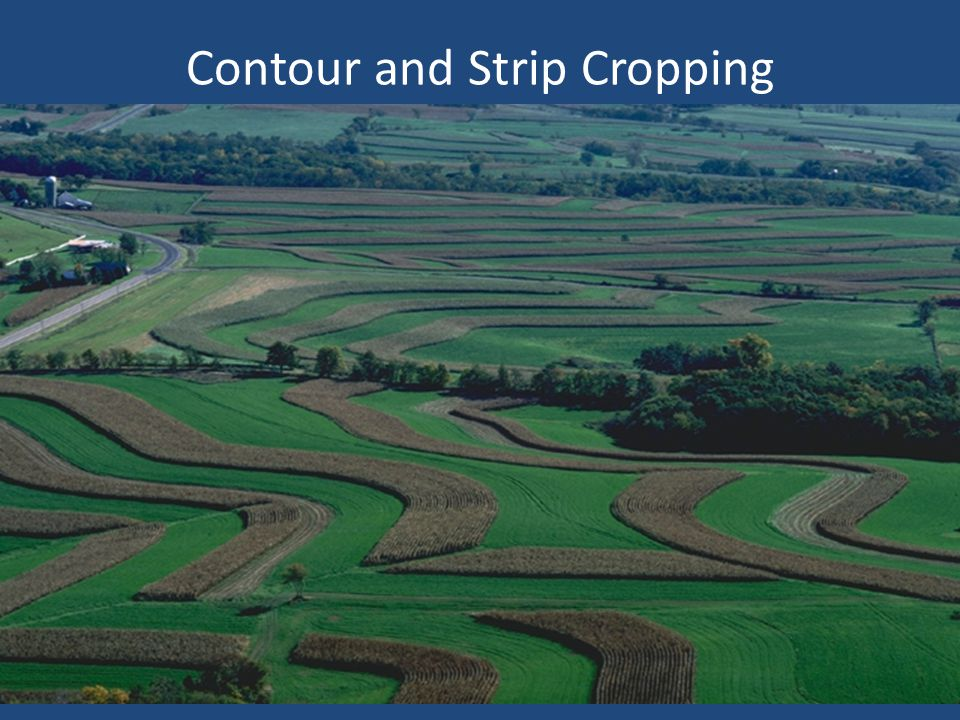 Contour and Strip Cropping