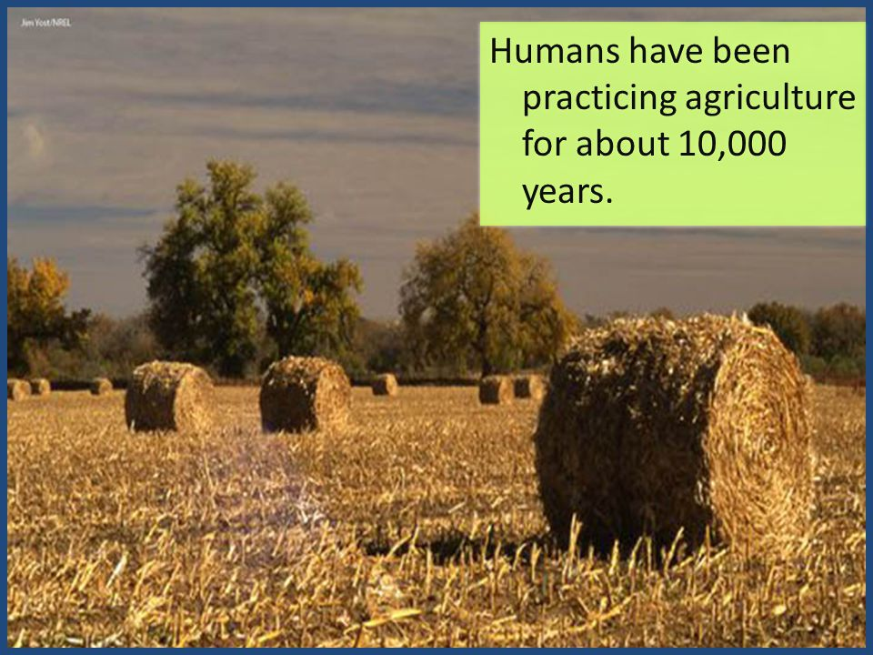 Humans have been practicing agriculture for about 10,000 years.
