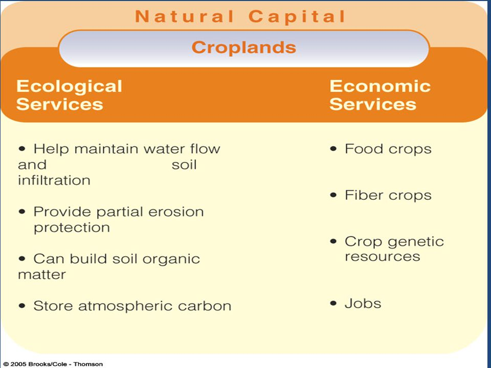 What are some of the ecological and economic services that croplands provide (what good are farms )
