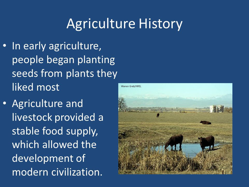 Agriculture History In early agriculture, people began planting seeds from plants they liked most.