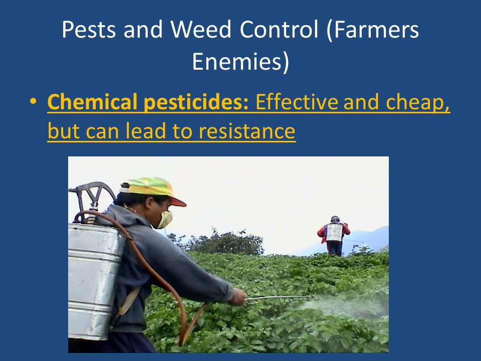 Pests and Weed Control (Farmers Enemies)