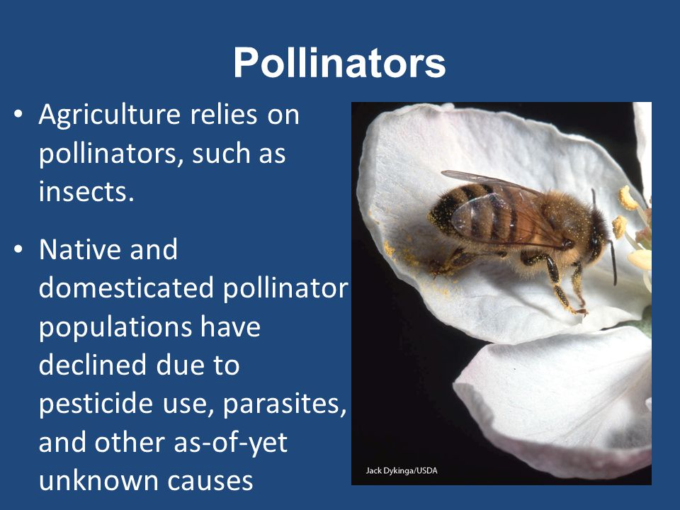 Pollinators Agriculture relies on pollinators, such as insects.