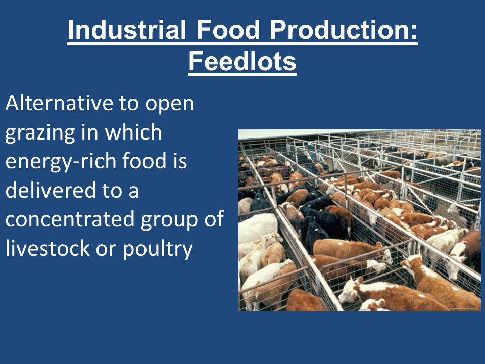 Industrial Food Production: Feedlots