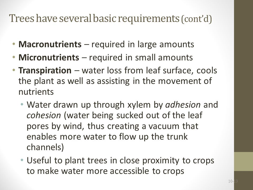 Trees have several basic requirements (cont'd)