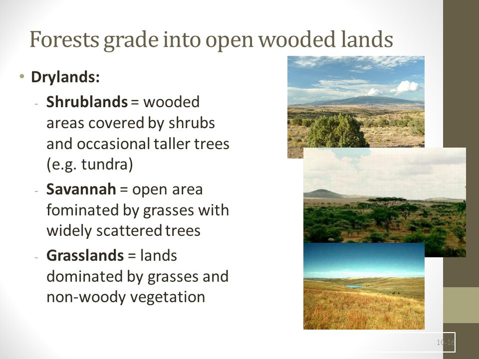 Forests grade into open wooded lands