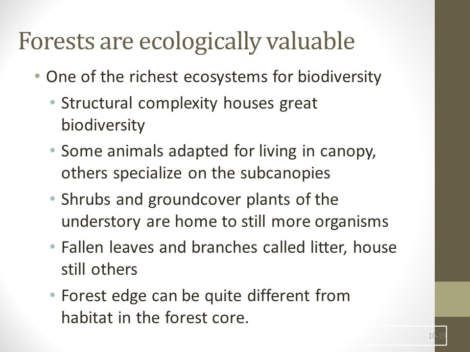 Forests are ecologically valuable