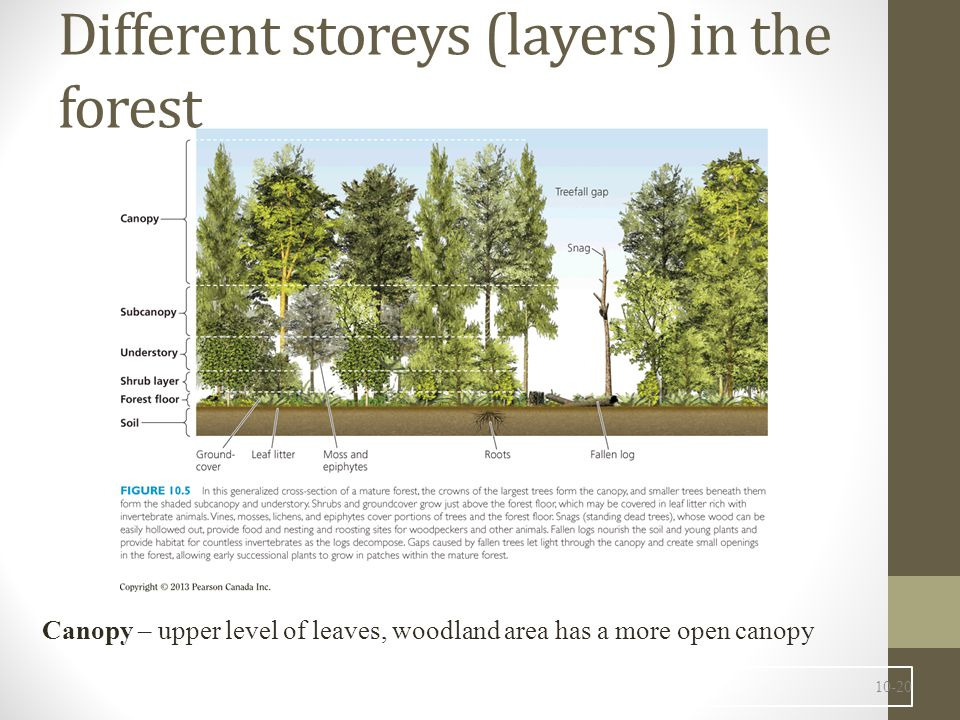 Different storeys (layers) in the forest