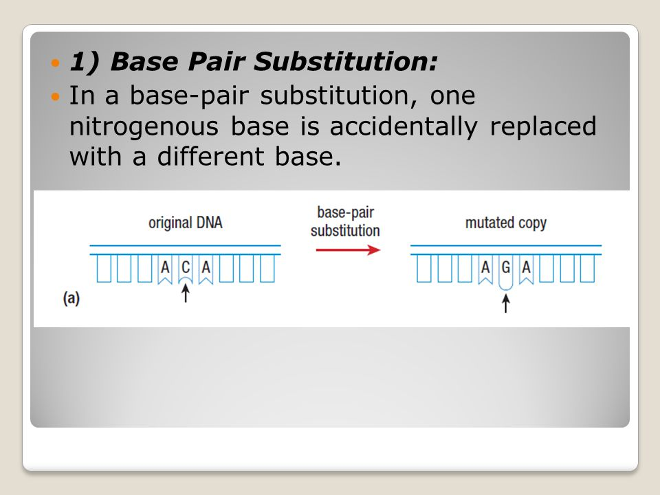 1) Base Pair Substitution: