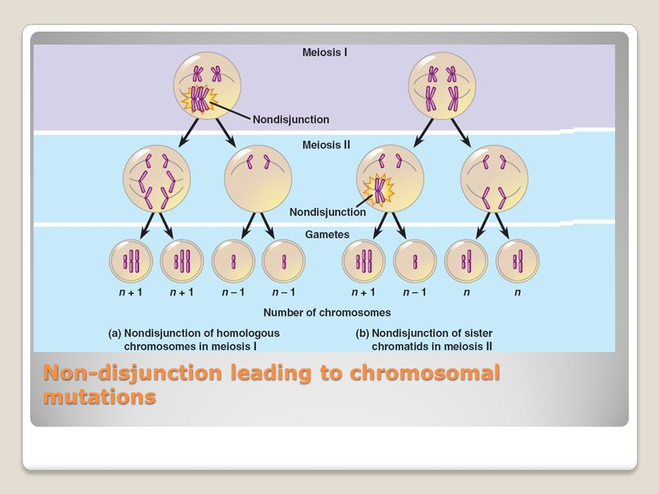 Non-disjunction leading to chromosomal mutations