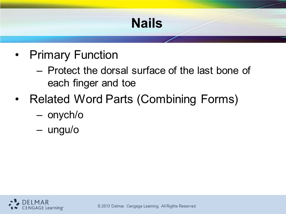 Nails Primary Function Related Word Parts (Combining Forms)