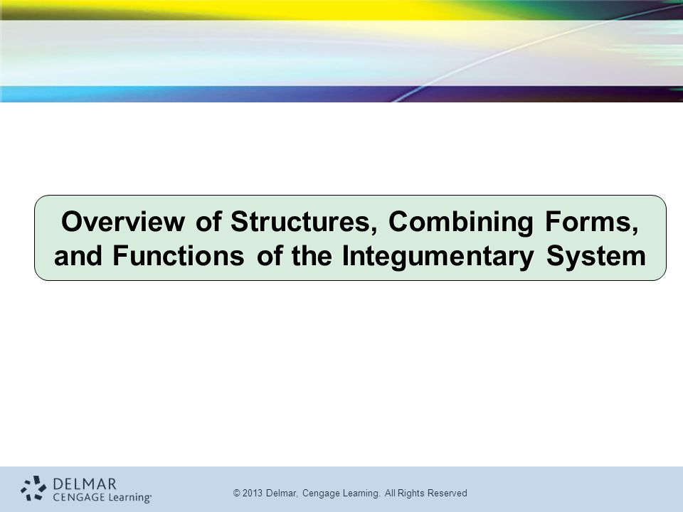 Overview of Structures, Combining Forms, and Functions of the Integumentary System