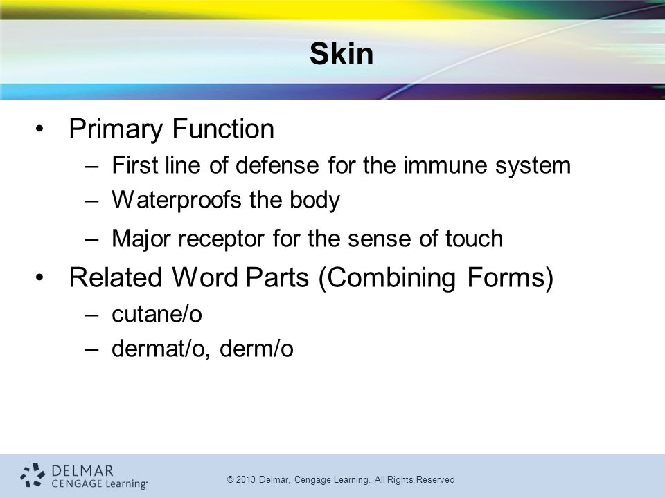 Skin Primary Function Related Word Parts (Combining Forms)