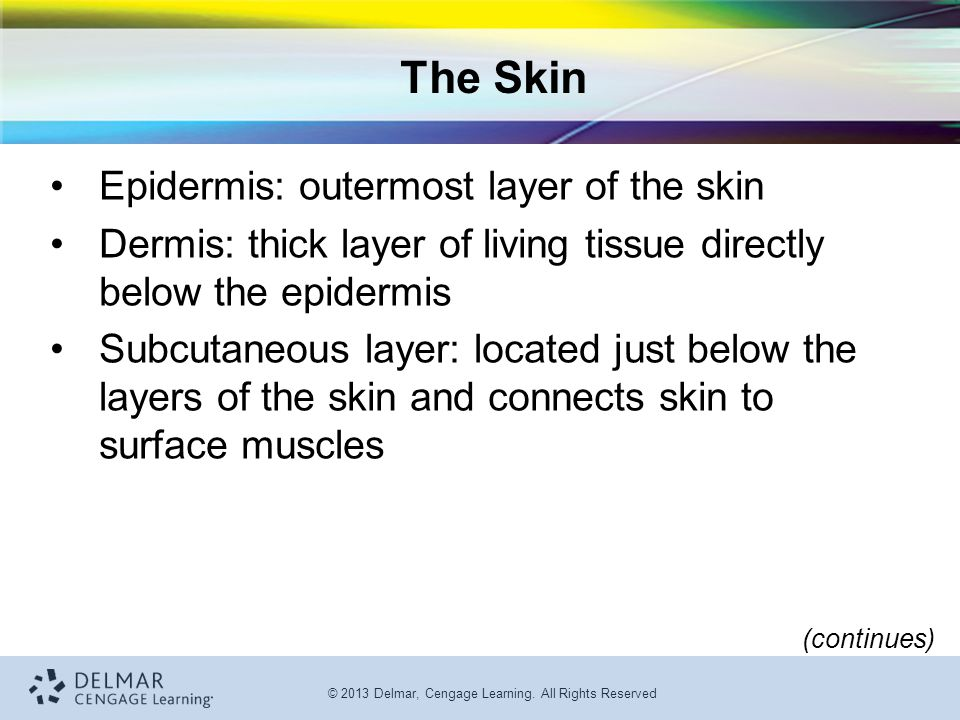 The Skin Epidermis: outermost layer of the skin