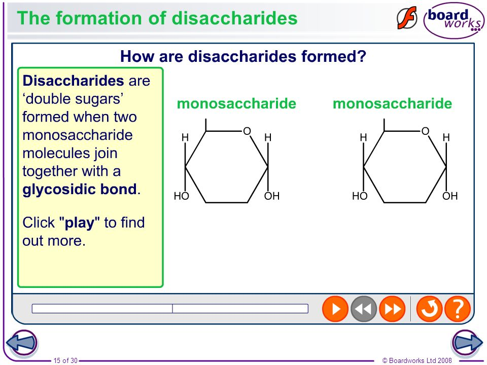The formation of disaccharides