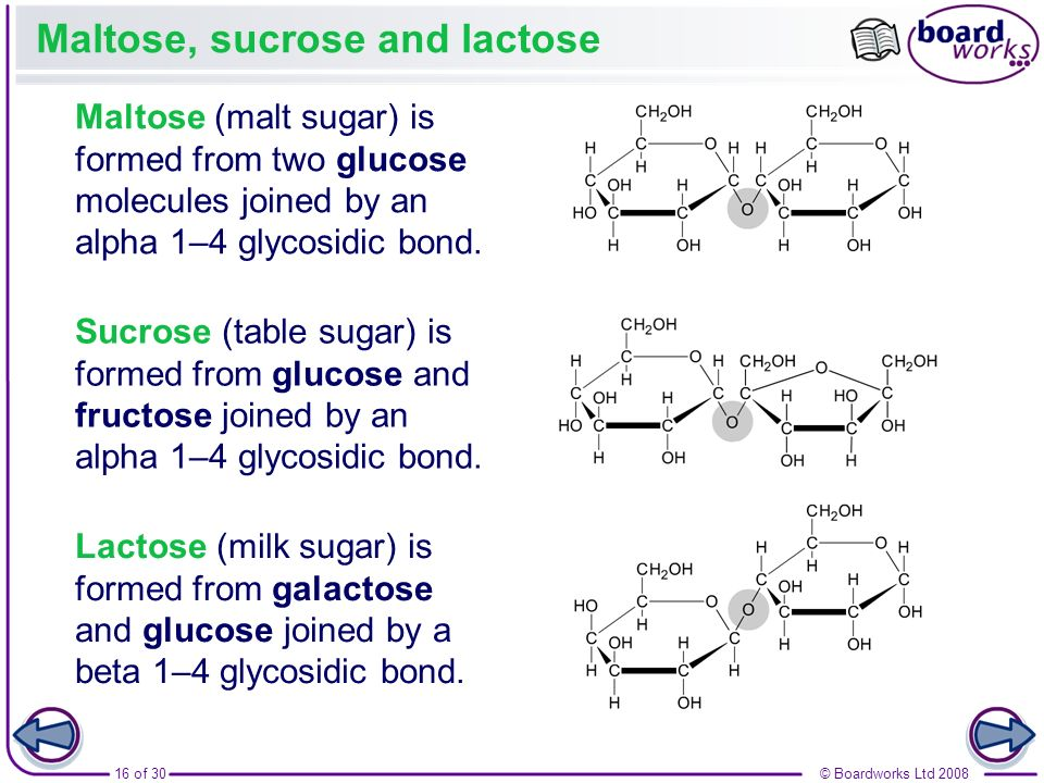Maltose, sucrose and lactose