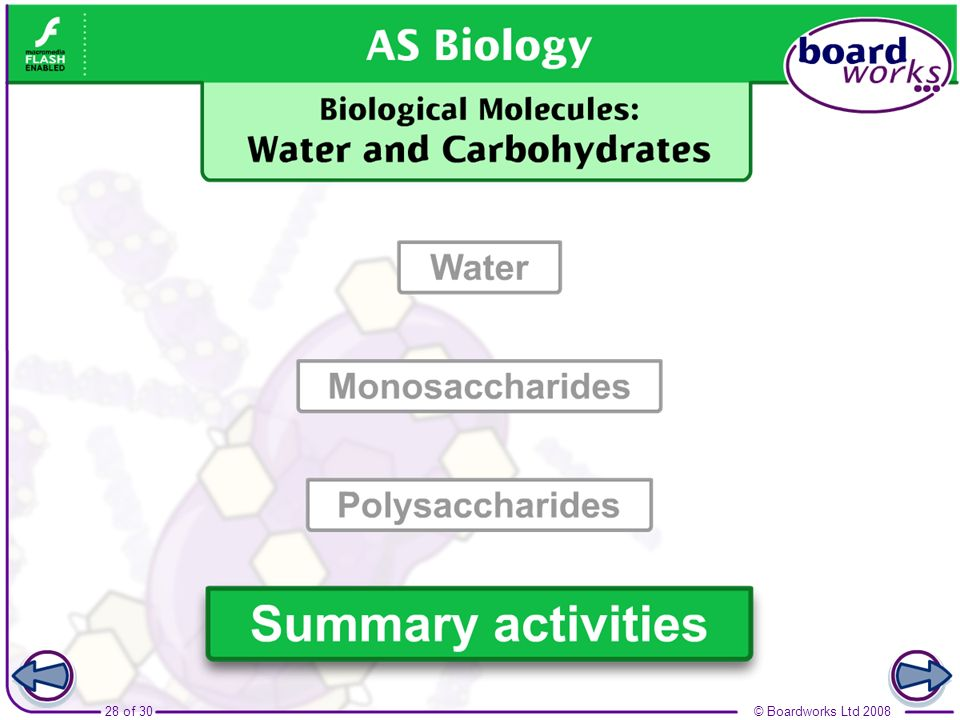 Boardworks AS Biology Biological Molecules: Water and Carbohydrates