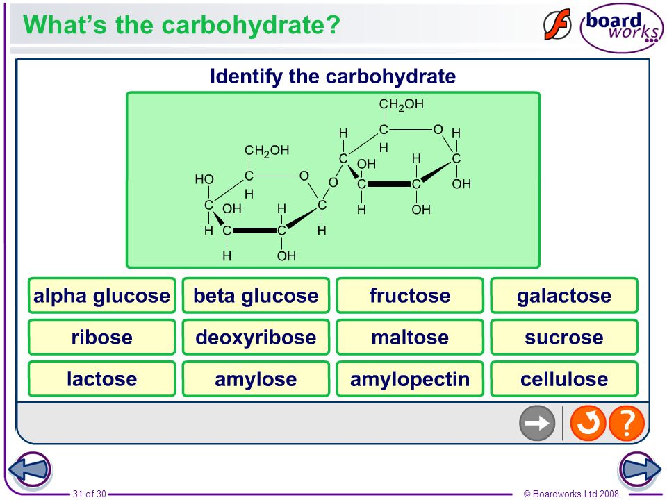 What's the carbohydrate