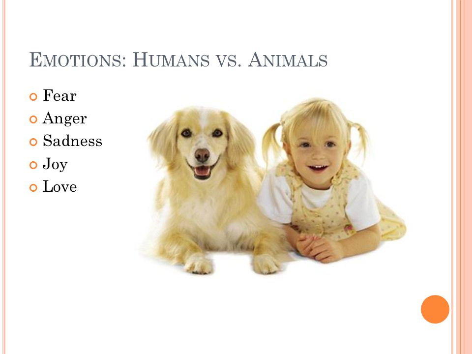 Emotions: Humans vs. Animals