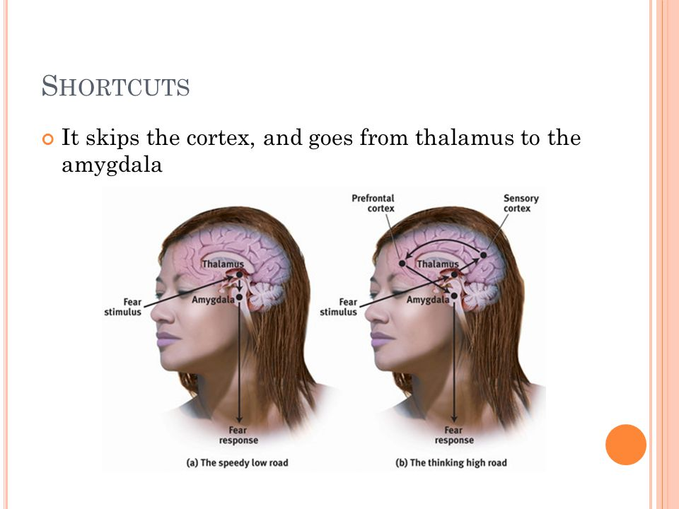 Shortcuts It skips the cortex, and goes from thalamus to the amygdala
