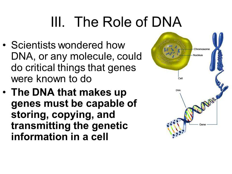 III. The Role of DNA Scientists wondered how DNA, or any molecule, could do critical things that genes were known to do.