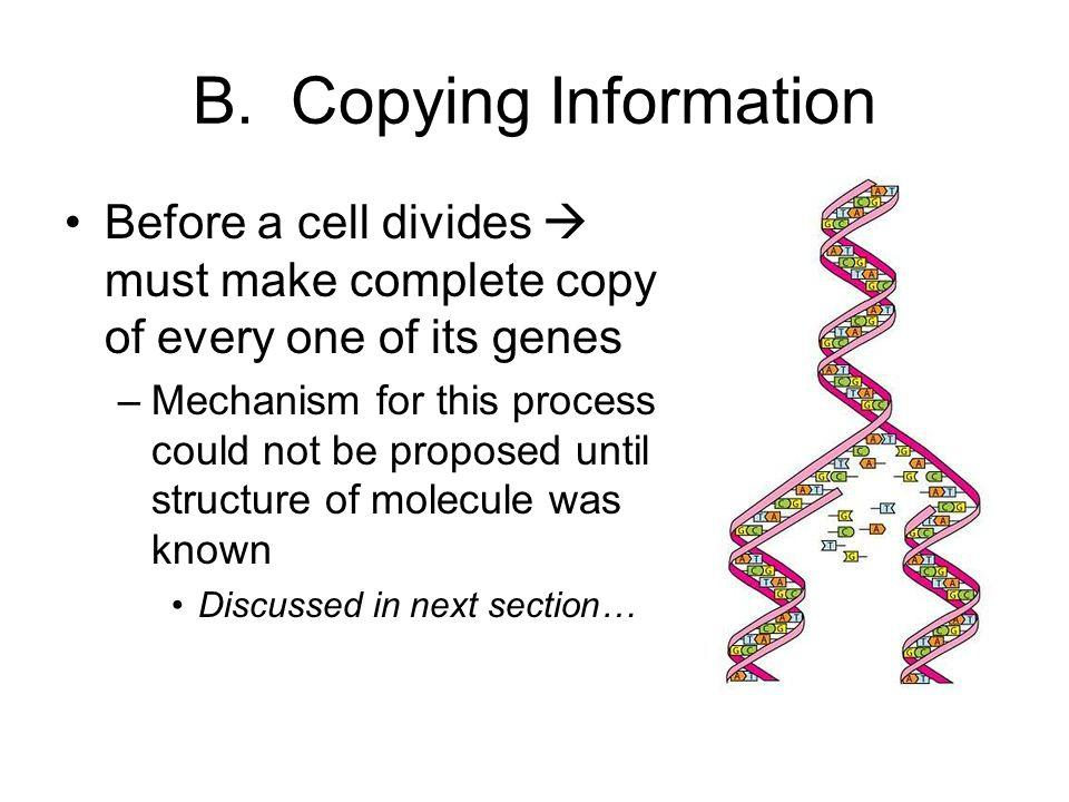 B. Copying Information Before a cell divides  must make complete copy of every one of its genes.