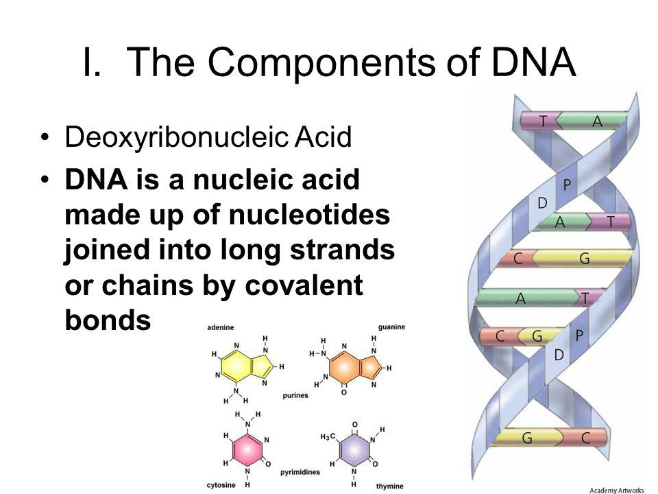 I. The Components of DNA Deoxyribonucleic Acid
