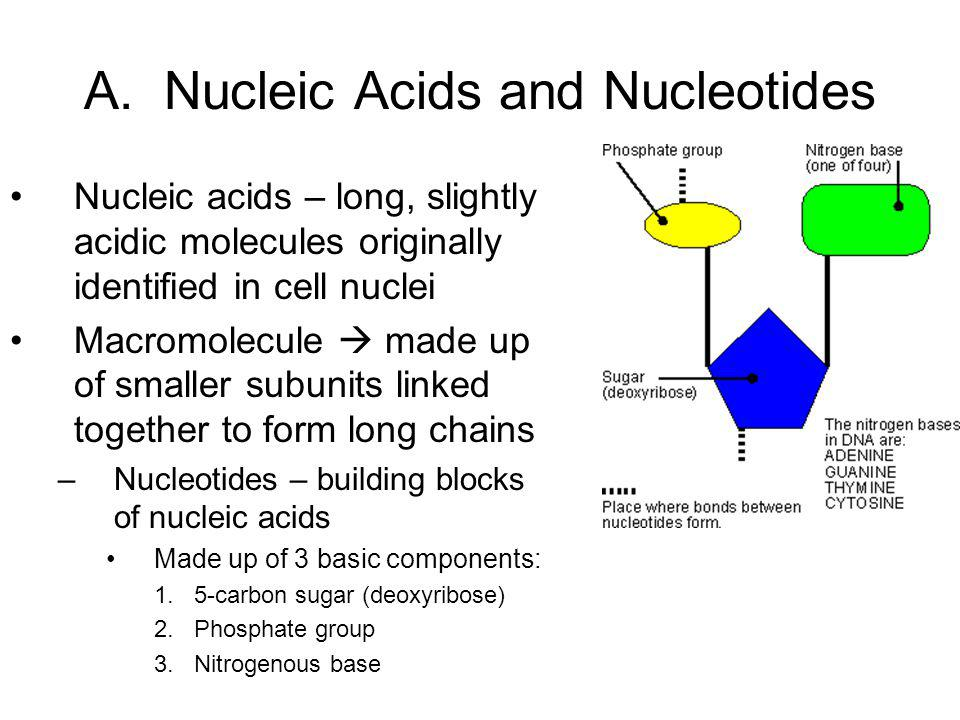 A. Nucleic Acids and Nucleotides