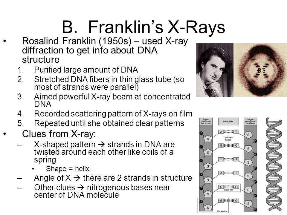 B. Franklin's X-Rays Rosalind Franklin (1950s) – used X-ray diffraction to get info about DNA structure.